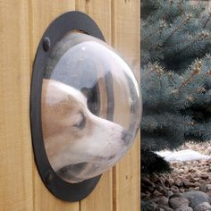 Pet Peek for all of the nosy neighbors out there...
