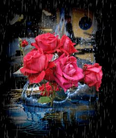 Browse pictures, photos, images, GIFs, and videos on Photobucket Amazing Flowers, Pretty Flowers, Red Flowers, Blue Roses, Beautiful Gif, Beautiful Roses, Beautiful Pictures, Gif Animé, Animated Gif