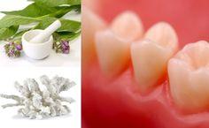 Zähne auf natürliche Art und Weise heilen und reparieren Mit Sano Meereskoralle und Beinwell