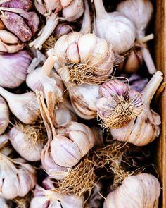 Emma K. Morris (Photographer): Garlic