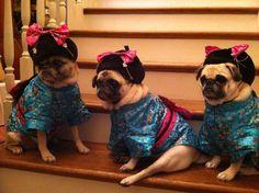 Lily's precious cousins