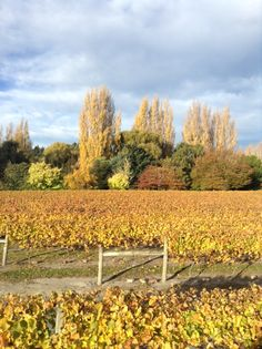 awesome vineyard image, check out the colours