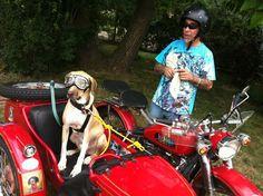 Sidecar Dog