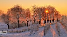 Trees in the sun by ArieLok. Please Like http://fb.me/go4photos and Follow @go4fotos Thank You. :-)