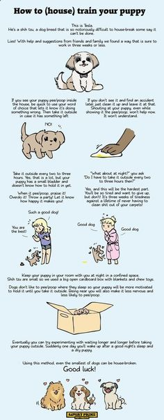 How To (house) train your puppy. [Infographic Guide]