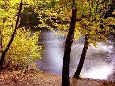 Herbst am Waldsee
