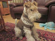 Image courtesy of Bouncing Bertie This is the very handsome, Bertie. He lives with my lovely neighbour Gail. Fox Terriers, Wire Fox Terrier, I Love Dogs, Cute Dogs, Shetland Wool, Cutest Animals, My Animal, Best Dogs, Doggies