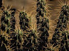 # Cactus Thorns Houseplant Hd Flowers, Desktop Windows, Cactus Plants, Wallpaper Backgrounds, House Plants, Fine Art Prints, Wall Art, Frame, Jet