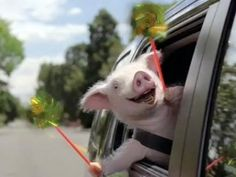 7 Best Geico Piggy Images In 2016 Commercial Ads Funny Ads Funny