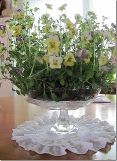 Violas in a centerpiece for the dining table.