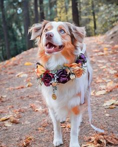 Interview: Artist Designs Custom Flower Crowns for Your Beautiful Pets - . - Interview: Artist Designs Custom Flower Crowns for Your Beautiful Pets – - The Animals, Pretty Animals, Cute Baby Animals, Funny Animals, Funniest Animals, Cute Dogs And Puppies, Pet Dogs, Doggies, Aussie Puppies