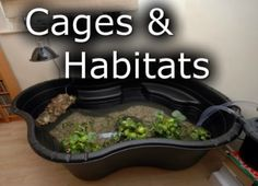 Pet Turtle Tank & Aquarium Setup, Types of Turtles, Questions & Forums