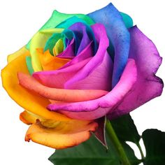 happy rainbow roses from the uku0027s happy rose delivery service of choice