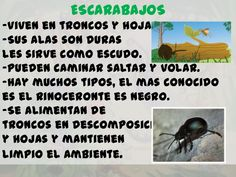 Los insectos para infantil Memes, Homeschooling, Ideas, Saints, Home, Insect Activities, Beetles, Spring, Drawings