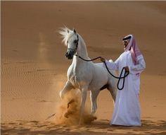 Google Image Result for http://1.bp.blogspot.com/_Dz32x3e0KsQ/Sdvi1JpfZJI/AAAAAAAACm0/dsDnWMbr05Q/s400/arabian%2Bhorse2.bmp