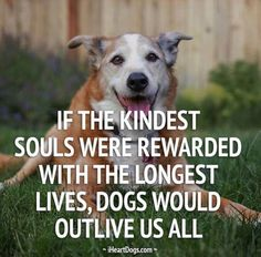 If the kindest souls were rewarded with the longest lives, dogs would outlive us all. I love dogs so much. I Love Dogs, Puppy Love, Cute Dogs, Mans Best Friend, Best Friends, Loyal Friends, Animals Beautiful, Cute Animals, Jiff Pom