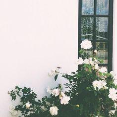 Pra não falar que não falei das flores...