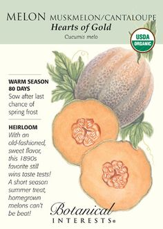 80 days. Hearts of Gold is a high quality heirloom that can be grown in short season climates! These very productive plants produce fruit that is dark orange, firm-fleshed and aromatic. Round, 3 lb. f