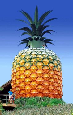 Iconic Queensland, Australia Landmark: The Big Pineapple on the Sunshine Coast Architecture & Design Sunshine Coast, Tahiti, Queensland Australien, Santorini, Pinup, Big Pineapple, Roadside Attractions, Roadside Signs, Thing 1