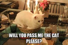 Will you pass me the cat please!
