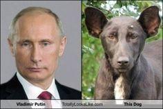 プーチン犬の画像 プリ画像