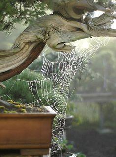 http://www.artofbonsai.org/galleries/images/halloween_2006/Dsc_6176v.jpg