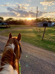 This will always be my favorite view! Cute Baby Animals, Farm Animals, Animals And Pets, Funny Animals, Beautiful Horse Pictures, Beautiful Horses, Animals Beautiful, Cute Horses, Horse Love