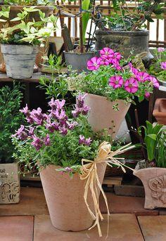 朝ガーデニングは、一日の活力に繋がる! http://www.iris-kurashi.com/health/asakatsu/03.asp