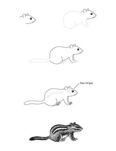 chipmunk eastern drawing lesson