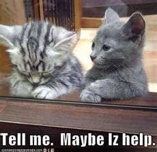 funny-pictures-kitten-offers-to-help-sad-friend.jpg