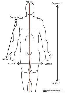 Medial: significa hacia la línea media del cuerpo, como el esternón.