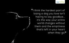emptiness losing a dog