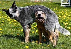 Mas! Eles não são muito chegados em abraços. No mundo canino, colocar uma pata por cima de outros animais significa domínio.