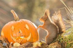 pumpkin monster | by Geert Weggen