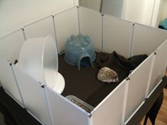 Cage dillema: cage and placement - Hedgehog Central – Hedgehog pet care & owner forum Hedgehog Care, Pygmy Hedgehog, Hedgehog House, Baby Hedgehog, Hedgehog Diy Cage, Hedgehog Habitat, Animals And Pets, Cute Animals, Animal Projects