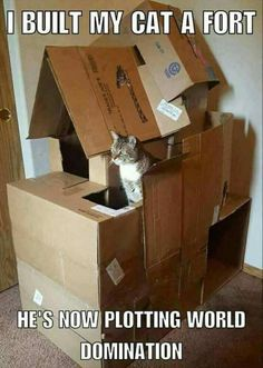 Aegean cat, Kitten, Bengal cat, Khao Manee, Turkish Van, Chinese Imperial Dog, Image, Funny animal, Humour, Cat tree: I BUILT MY CAT A FORT HE'S NOWI PLOTTING WORL DOMINATION