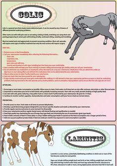 best horse insurance