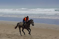 Most mornings you will be able to see people exercising their horses on Goolwa Beach