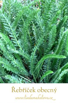 My Secret Garden, Herbs, Health, Food, Gardening, Health Care, Essen, Lawn And Garden, Herb