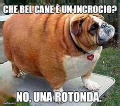 Cani...