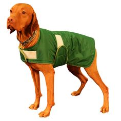 Vizsla Winter Coat, custom made just for your dog with adjustable velcro closures