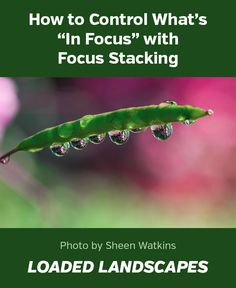 "How to Control What's ""In Focus"" with Focus Stacking #photography #naturephotography #photographytips"