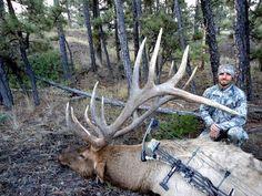 Big Montana Bull - Elk hunting - The Outdoors Forum Board