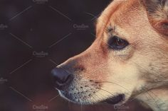 Dog Photos Dog close up by Green-Fly Media