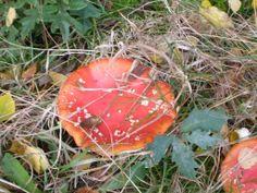 høst.Fall