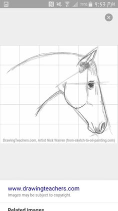 Drawing Tutorial Horse Head Ideas For 2019 Easy Pencil Drawings, Pencil Drawings Of Animals, Realistic Drawings, Cool Drawings, Drawing Sketches, Drawing Animals, Animal Sketches, Drawing Tips, Drawing Ideas