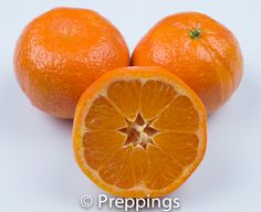Mandarin Orange - Search by flavors, find similar varieties and discover new uses for ingredients @ preppings.com