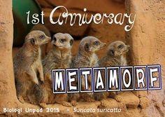 1st Anniversary Metamorf