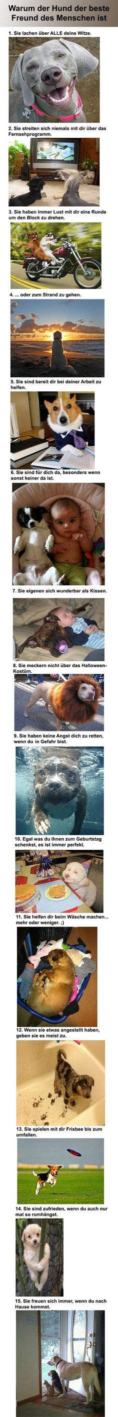 Partnersuche – Männer und Frauen im Vergleich – Win Bild Warum Hunde des Menschen bester Freund sind – Win Bild Animals And Pets, Funny Animals, Cute Animals, Silly Dogs, Funny Dogs, I Love Dogs, Cute Dogs, Tierischer Humor, Cat Facts