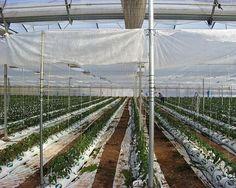 Andalucía amplía hasta el 24 de enero el plazo para solicitar ayudas a la modernización de invernaderos